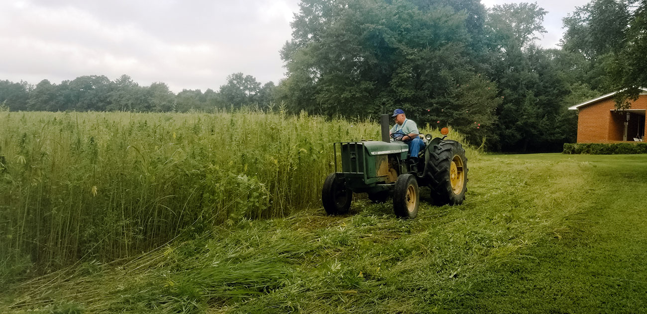 North Carolina Piedmont hemp harvest
